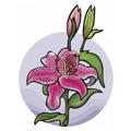 Jaki kwiat przypominasz?